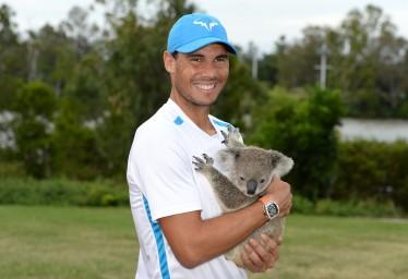 Rafael Nadal of Spain holds a Koala on day two of the 2017 Brisbane International at Pat Rafter Arena on January 2, 2017 in Brisbane, Australia. (Jan. 1, 2017 - Source: Bradley Kanaris/Getty Images AsiaPac)